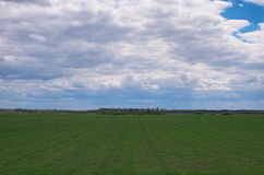 Field with green little plants and trees at the background. Landscape in spring cloudy day Royalty Free Stock Photo