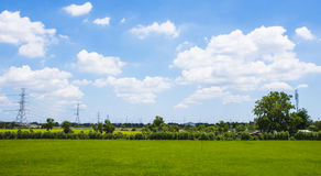 Field with green rice and blue sky and clouds Stock Image