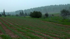 Field of green rows of vegetables. Video of field of green rows of vegetables stock video footage