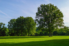Field of Green Royalty Free Stock Photos