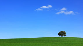 Field of green wheat with tree. royalty free stock photos