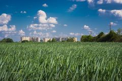 Field of green young wheat against the backdrop of a large city building. the concept of providing people with food.  Stock Images