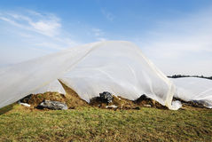 Growing Vegetables. Field for growing vegetables covered by a plastic foil Stock Image