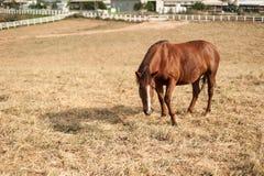 field hästar Royaltyfri Fotografi