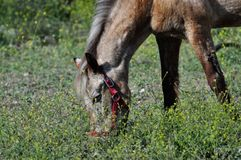 field hästen arkivbild