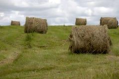 field hö Royaltyfri Bild