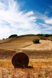 field hö Royaltyfria Bilder