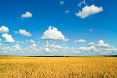 Field with harvest Stock Photography