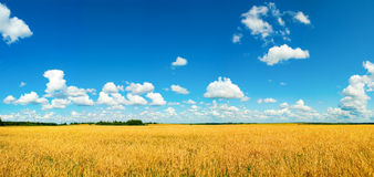Field with harvest Royalty Free Stock Photography