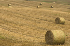 Field after harvest Royalty Free Stock Photos
