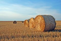 Field after harvest Stock Images
