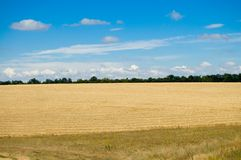 Field with harvest Royalty Free Stock Photo
