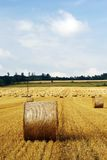 Field after harvest. With light blue sky and clouds stock photos