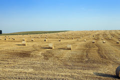 Field after harvest Royalty Free Stock Photo