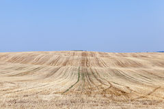 Field after harvest Stock Photography