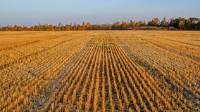 Field after harvest. Royalty Free Stock Photography