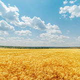 Field with harvest and clouds in sky Stock Images