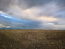 Field after the harvest with dark sunset sky. royalty free stock images