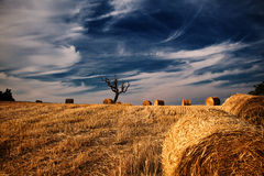 Field after harvest and dramatic sky during sunset Royalty Free Stock Photo