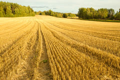 Field after harvest. Finnish wheat field after harvest Royalty Free Stock Images