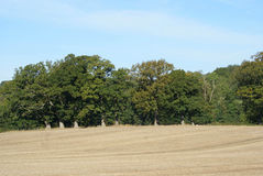 Field after the harvest. Landscape. Harvested field in England Stock Photos
