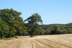 Field after the harvest. Landscape. Harvested field in England Royalty Free Stock Photography