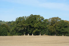 Field after the harvest. Landscape. Harvested field in England Stock Images
