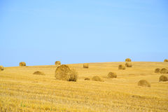 Field after Harvest Straw Stock Image