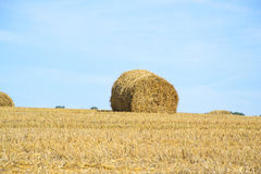Field after Harvest Straw Royalty Free Stock Photo