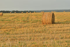 Field after harvest Royalty Free Stock Images