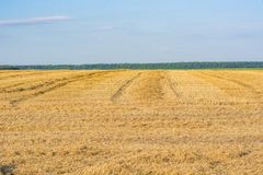 Field after harvest in summer or autumn and blue sky with clouds. Field after harvest of wheat or rye. Summer or autumn and a blue sky with clouds Stock Photography