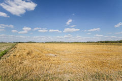 Field after the harvest. View of the field after the harvest Royalty Free Stock Photography