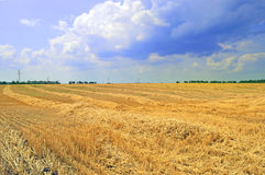 Field during harvest wheat. Field during harvesting wheat on a background cloudy sky Stock Image