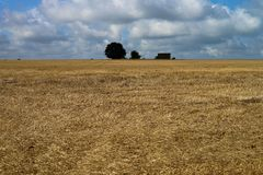Field after harvest. Yellow field after harvest with cloudy sky and trees at background Stock Photos