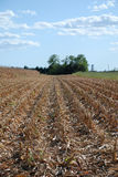 Field of Harvested Corn Royalty Free Stock Photos