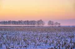 Field with harvested corn in the fog in winter Stock Images