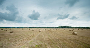 Field of Harvested Wheat and Rolls of Straw Stock Photo