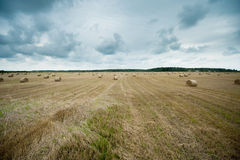 Field of Harvested Wheat and Rolls of Straw Stock Photography