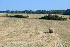 Field with harvested wheat in the Ukraine. Forest and a corn field in the background Stock Image
