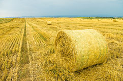 Field after harvesting. Yellow field after harvesting with stacks of collected wheat Stock Photography