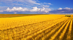 The field  after harvesting. Huge field in state Montana after harvesting Stock Images