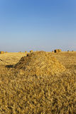 Field after harvesting Royalty Free Stock Images