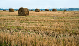 Field after harvesting wheat,  haystack. Field after harvesting wheat, haystack, seasonal Royalty Free Stock Photos