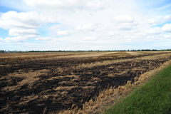 A field that has been burned to clear crop residue. Often called field burning, this technique is used to clear the land of any existing crop residue as well as Royalty Free Stock Photos