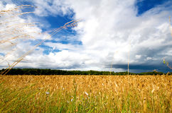 Field of hay Royalty Free Stock Images