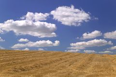 Field of hay. Royalty Free Stock Images