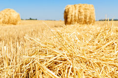 Field with hay Royalty Free Stock Images