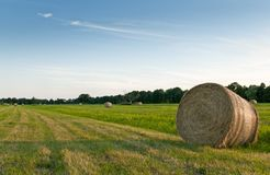 Field with hay bale roll Royalty Free Stock Photography