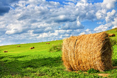 Field of hay bales royalty free stock image