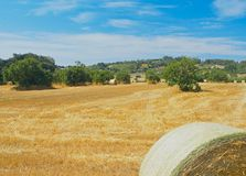 Field with hay bales Royalty Free Stock Images